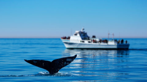 san diego whale watching excursions