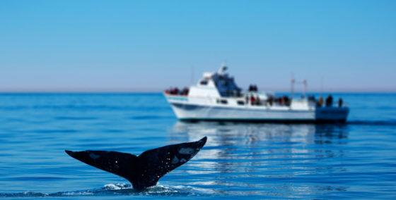 whale-watching-excursions