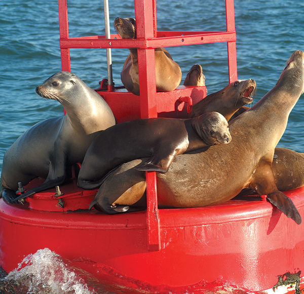 group of sea lions sitting on a buoy